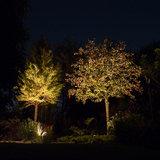 Bomen uitlichten spots