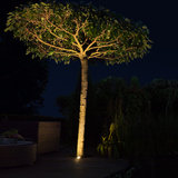 Led grondspot boom uitgelicht
