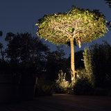 boom uitlichten led