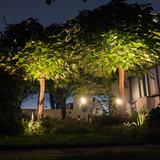 Bomen verlicht met grondspots